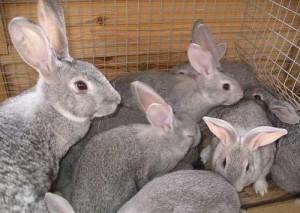 Расчет рентабельности кролиководства