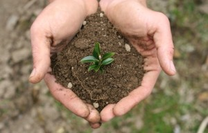 Что выращивать на огороде