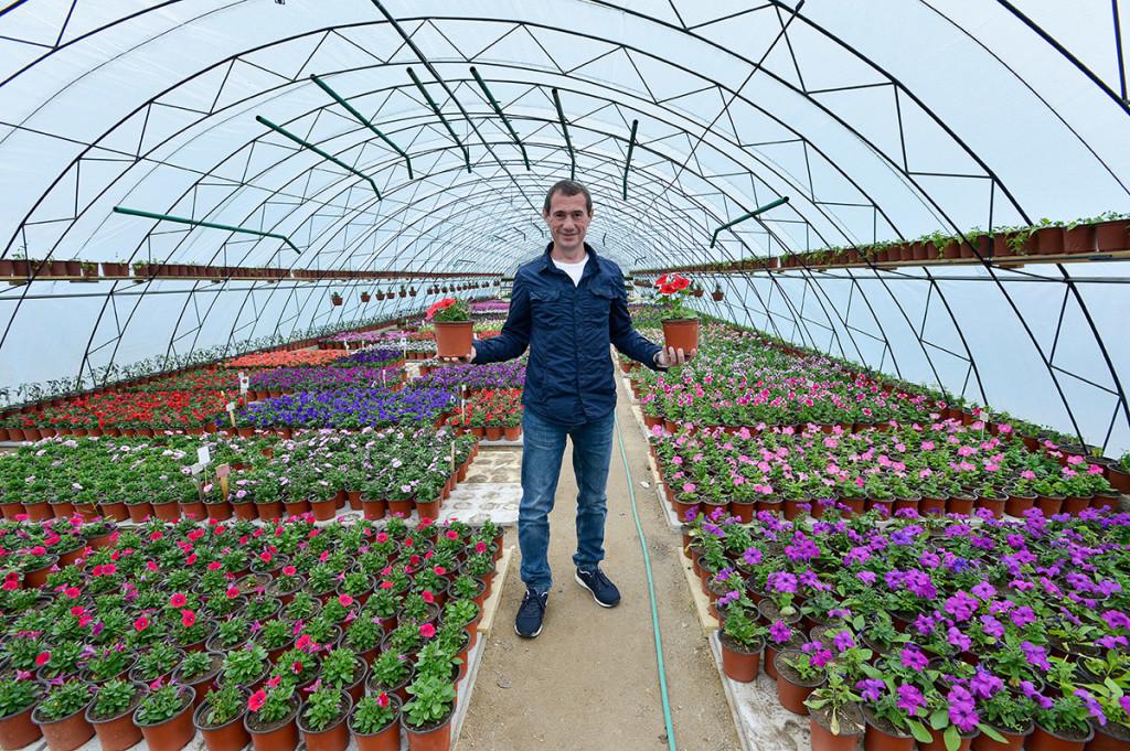 Выращивание цветов в теплице как бизнес - как добиться максимальной