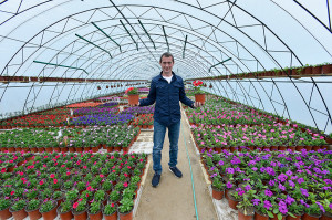 Цветы для выращивания и продажи