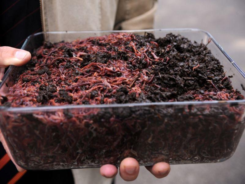 Технология выращивания червей