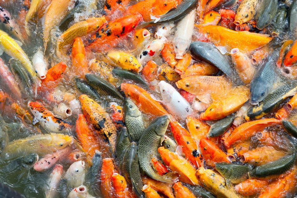 Бизнес-план разведения рыбы в домашних условиях