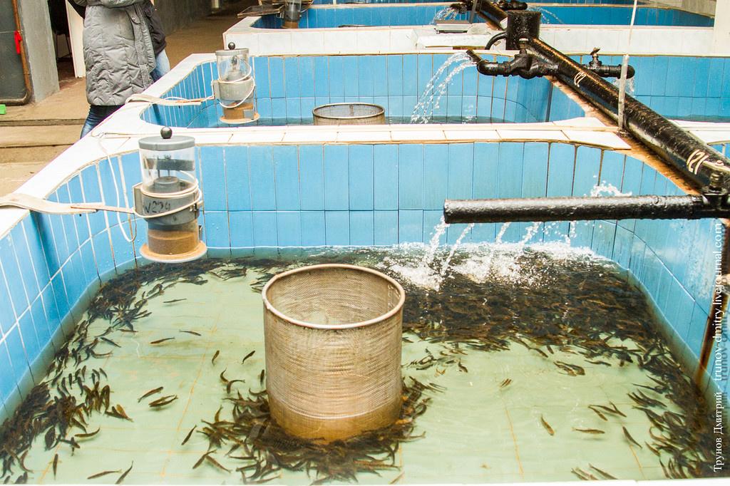 Пластиковые бассейны для разведения рыбы